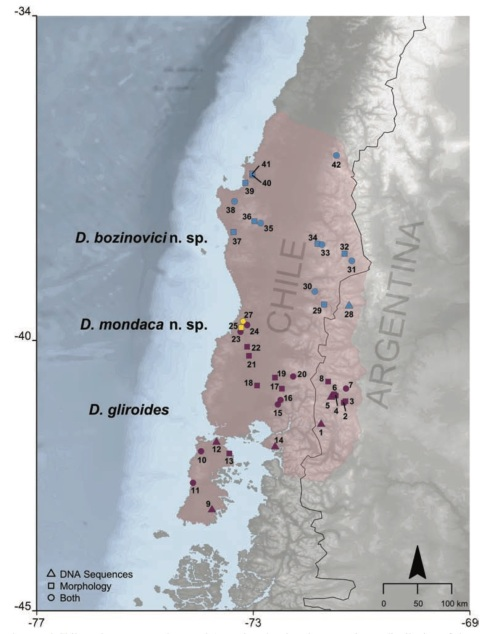 The approximate distribution of monitos del Monte in southern Chile and Argentina, with localities where the three species have been identified. From D'Elia et al. (2016).