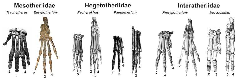 Figure 5 Typothere Feet.jpg