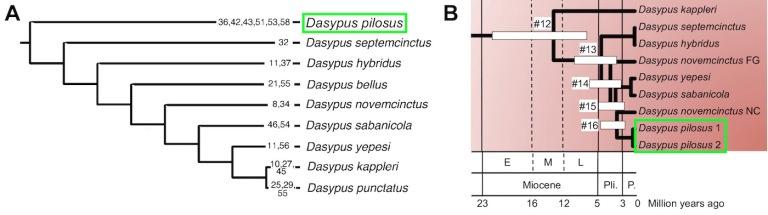 FIgure 4 Phylogeny.jpg