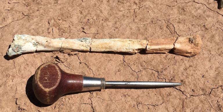 Litoptern bone.jpg