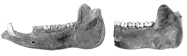 Figure 3 Amazonia Jaws Sm.jpg