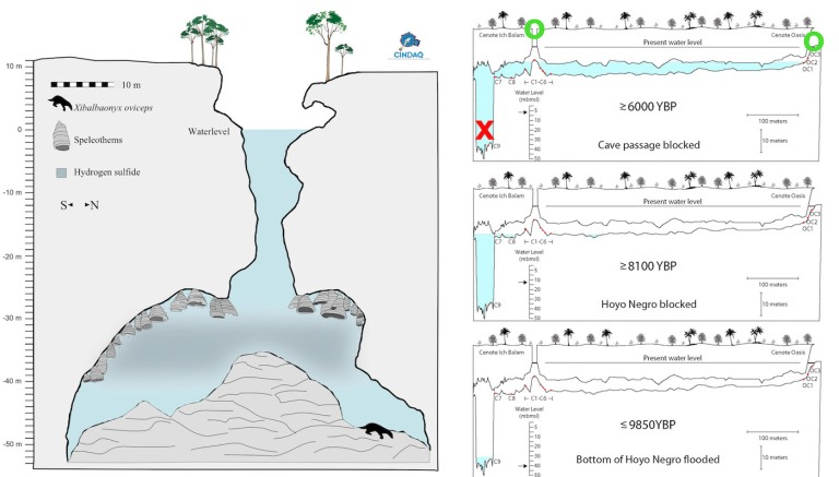 Figure 2 Cenote Diagram.jpg