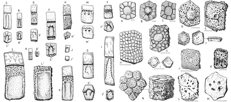 Figure 1 Osteoderms.jpg
