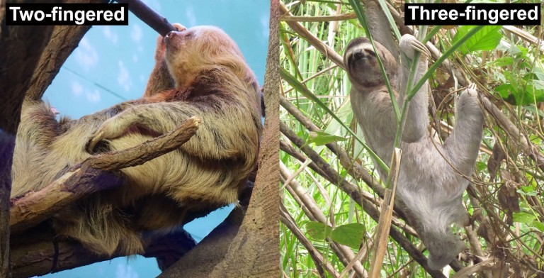 Fig. 1 Sloths.jpg