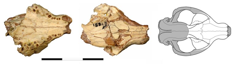 Fig 3 UF 27881.jpg